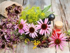 Wild Edible & Medicinal Plants