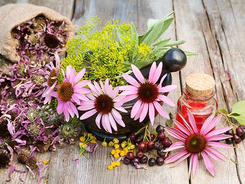 Wild Edible and Medicinal Plants Workshop