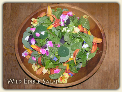 learn edible wild plants here foraging for delectable wild edibles Wild Edibles in Your Backyard 420x320