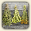 How to Dry Herbs