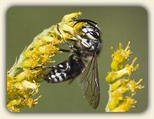 Wasp Sting Treatment